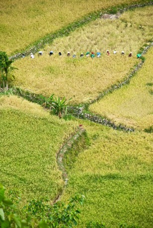 rice-terraces-21