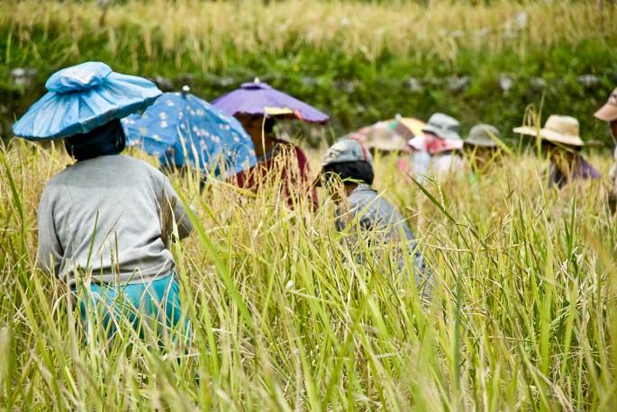 rice-terraces-22