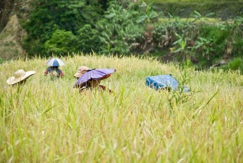 rice-terraces-24