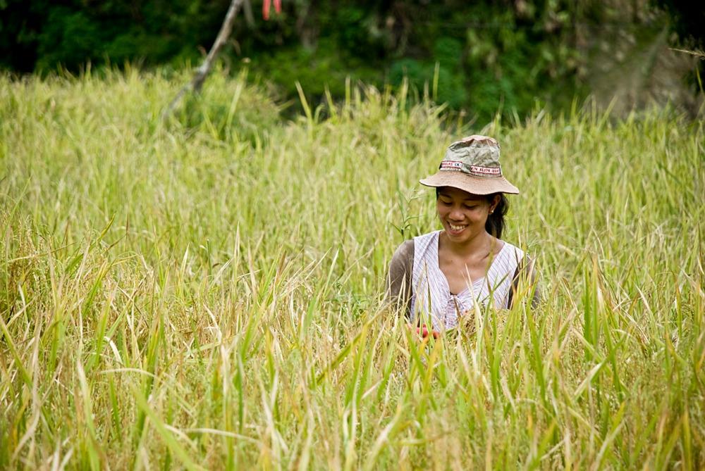 rice-terraces-27