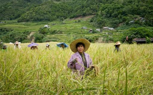 rice-terraces-29