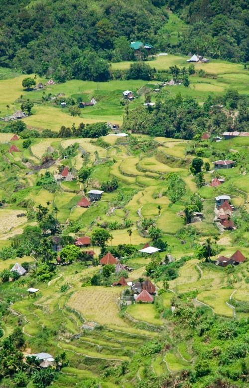 rice-terraces-3