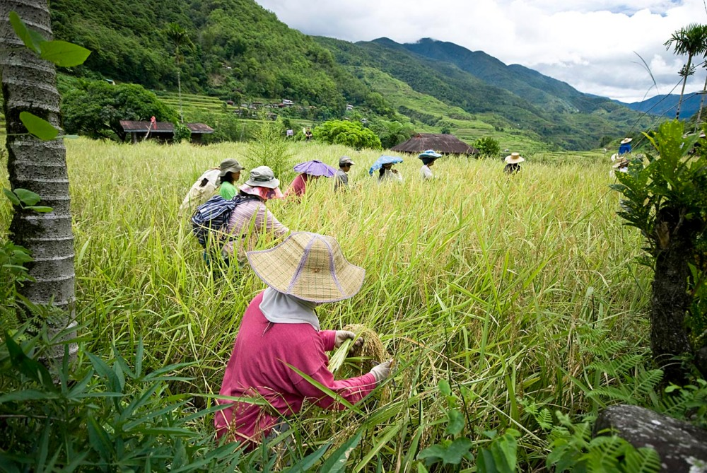 rice-terraces-30
