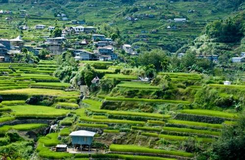 rice-terraces-5